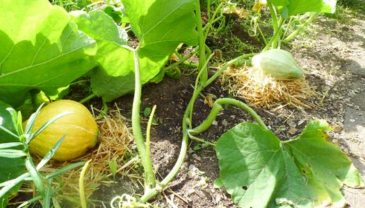 Kruidenatelier Filiamosa verwerkt de eetbare tuin op speciale wijze